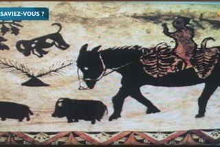 Le saviez-vous ?  L'histoire des cochons à Wallis et Futuna