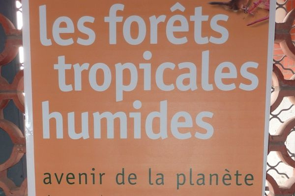 Exposition IRD Forêt tropicale
