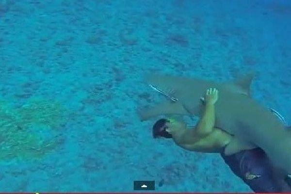 chevaucher un requin