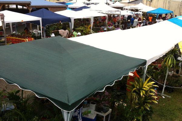 Plantes sous les tentes