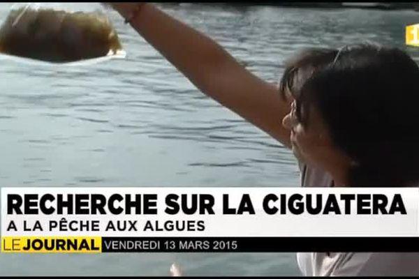 La Polynésie en pointe dans la lutte contre la cigüatera