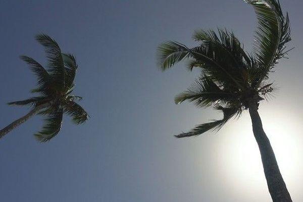 Ciel bleu chaleur soleil palmier nature climat chaud 030319