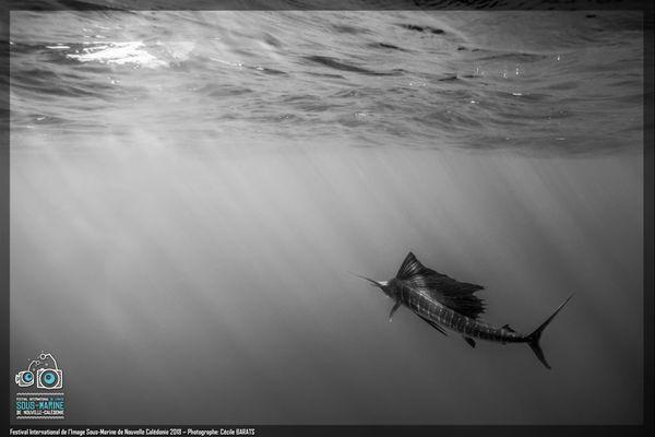 Festival de l'image sous-marine 2018, médaille d'or en catégorie photo noir et blanc