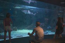 Admirer les poissons de l'Aquarium, un plaisir sélectif dans quelques jours...