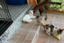 Chats dans un refuge de la SPA Martinique.