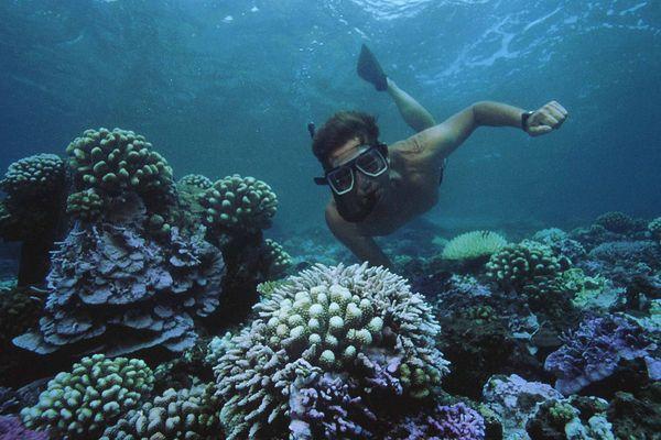 Un chercheur examine le phénomène de blanchissement des coraux dans les fonds marins de Tahiti