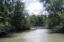 Une ballade sur la rivière de Montsinéry
