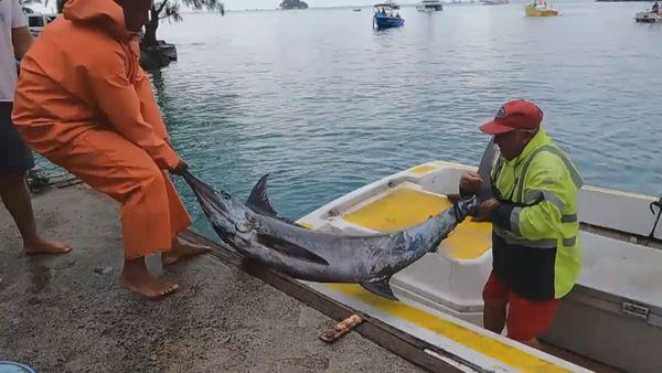 Raiatea : Tehema Bougues ramène le plus gros poisson et décroche le gros lot