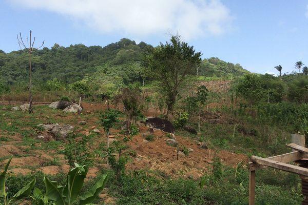 Abattis île de Cayenne