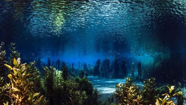 Photo primée au dixième festival de l'image sous-marine.
