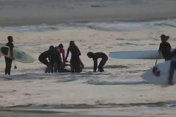 Attaque de requin en Australie