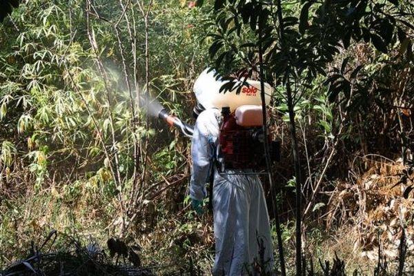 Lutte contre l'épidémie de dengue à la réunion