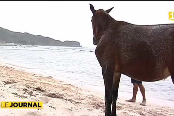 Les Australes à cheval !