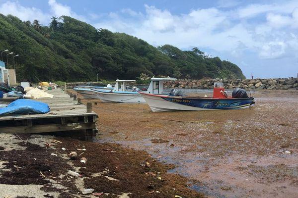 Algues au Marigot