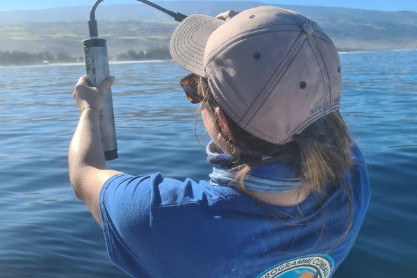 Hydrophone enregistrement chant baleines à bosse