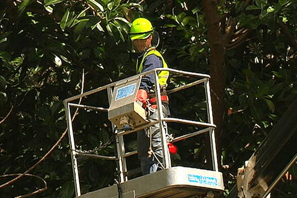 L'élagage des arbres pour prévenir les coupures de courant