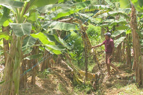 Agriculture/vol dans les exploitations agricoles