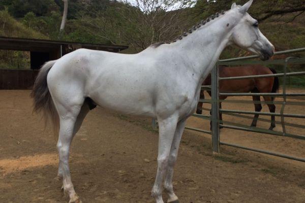 Cheval Upra équine