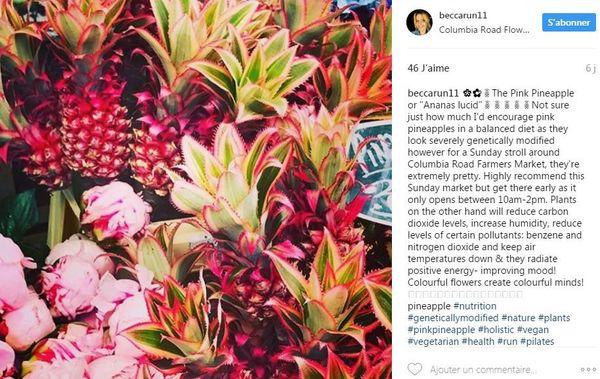 Ananas rose Pink pineapple