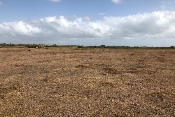 Site de Gaschet, à Petit-Canal. Ce réservoir d'eau a considérablement souffert de la sécheresse, cette année.