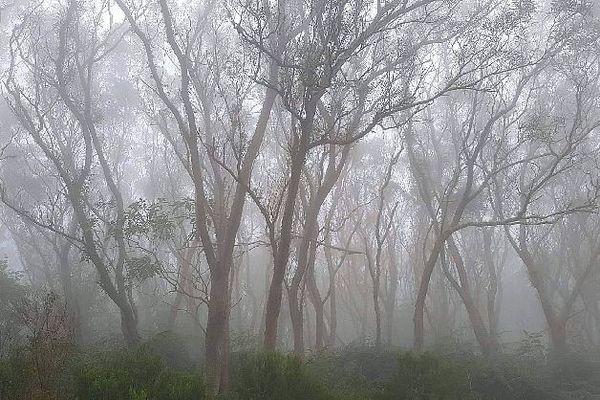 Forêts de tamarins