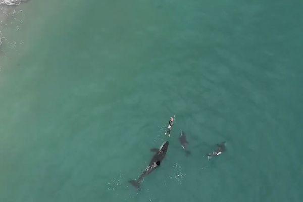 orques et nageuse