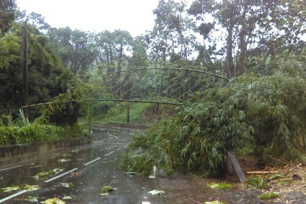 Matthew / Branches tombées
