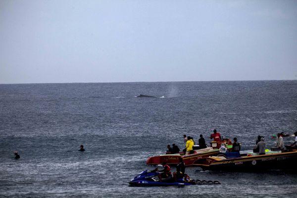 Les baleines au large de Teahupo'o