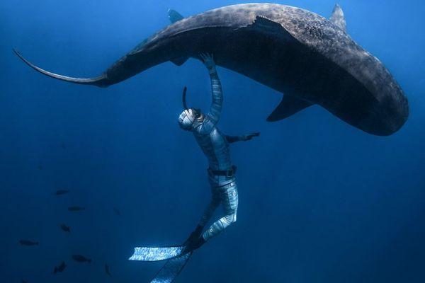 Le ballet de Pierrick Seybald avec les requins