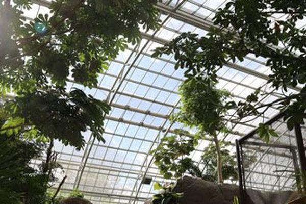 Les plantes de la grande serre