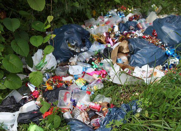 Des poubelles éventrées et éparpillées par les animaux