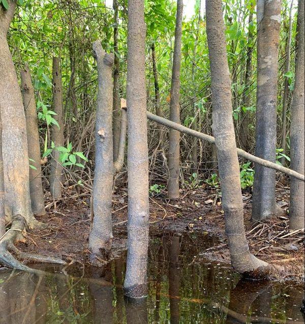 Forêt Amazonie - bagne des Annamites