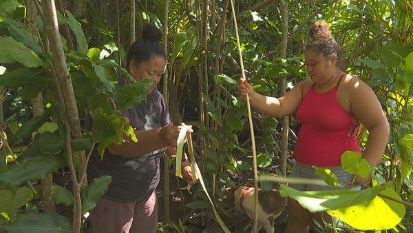 Crise sanitaire : les fabricants de more traditionnels au chômage technique à Huahine