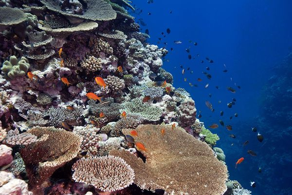 Récifs coralliens NC