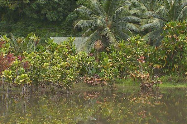 Des terrains inondés à Faaone