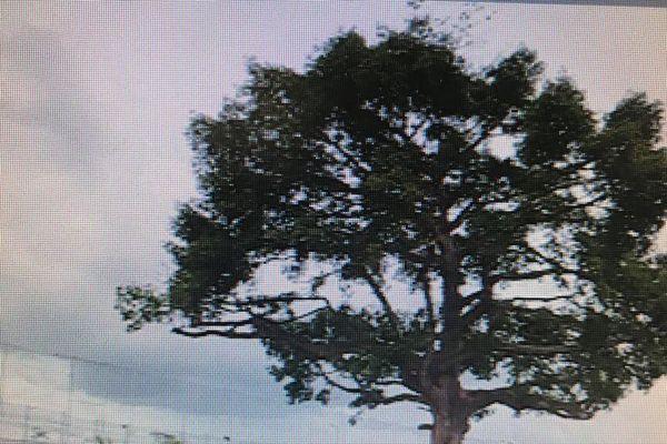 L'arbre à projectiles de Fond Sarail
