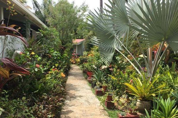 Jardin créole de Line Nicolas Tasia