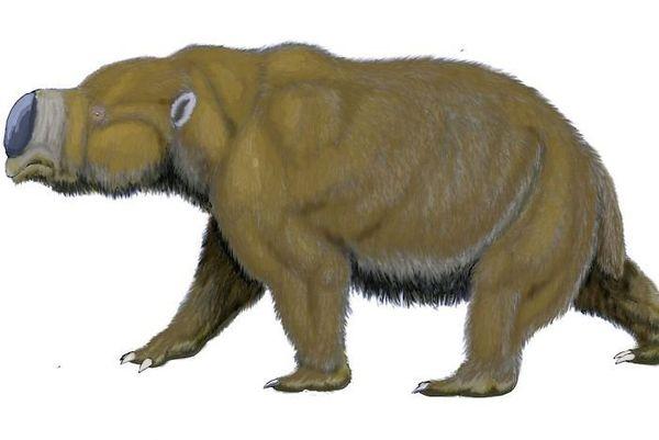 Dans la chaîne des Flinders, dans le nord de l'actuelle Australie du Sud, les aborigènes cohabitaient avec la mégafaune, et chassaient, entre autres, l'immense herbivore diprotodont.