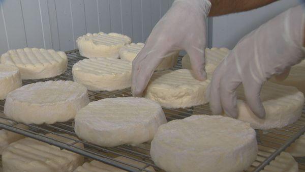 Fromages. Filière lait