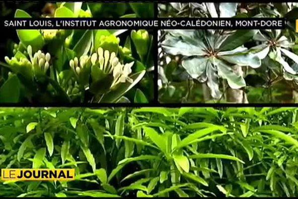 Les 700 plantes de Calédonie référencées dans un seul ouvrage