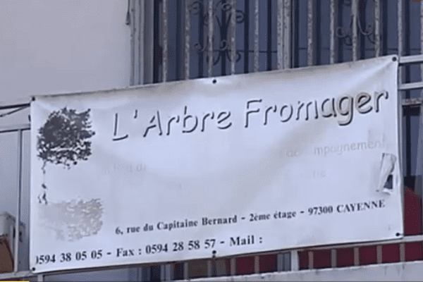 Association arbre fromager