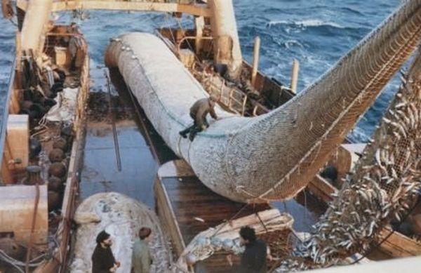 La surpeche vide les oceans