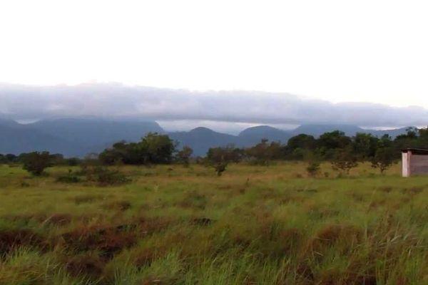 Nappi Guyana