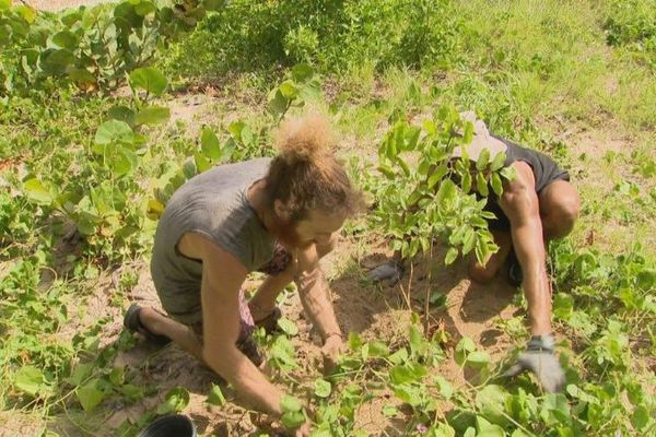 Replantation Anse Maurice