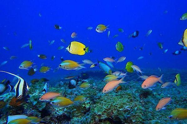 Vie sous-marine à Aldabra Seychelles