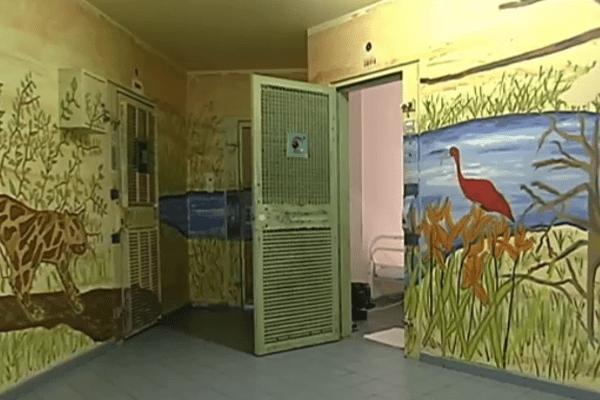 décoration jungle du quartier des mineurs de la prison de Guyane