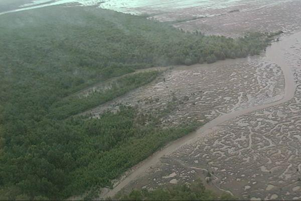 Mangrove estuaire Approuague