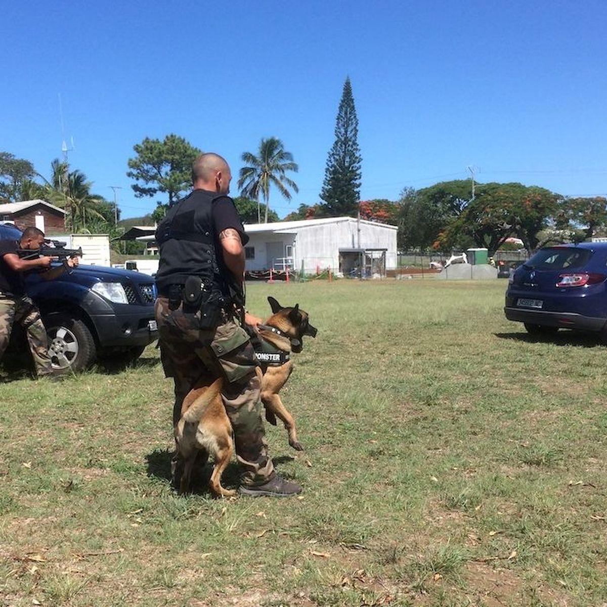 Un chien nommé Wolf en renfort des gendarmes