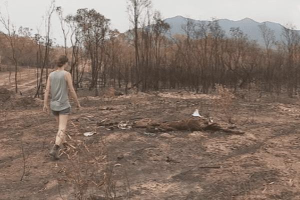 Nouvelle-Calédonie : les ravages de l'incendie de Bangou