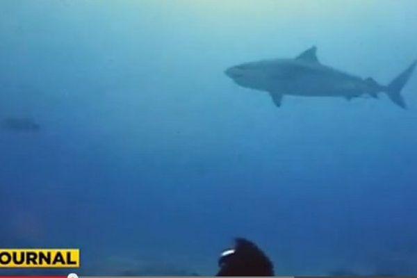 20150511 Shark feeding